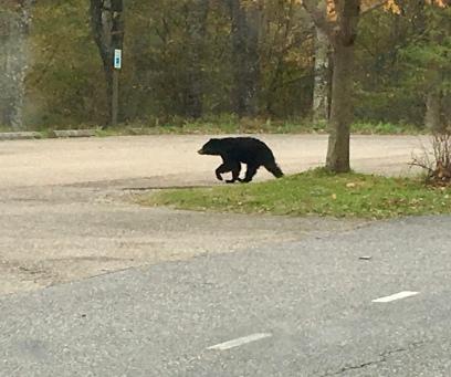 Bear Spotting! Big highlight for us